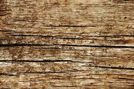 Close-up of old wood texture