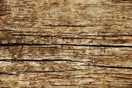old macro: Primer plano de la textura de madera vieja
