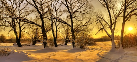 Beautiful winter sunset with trees in the snow Stock Photo - 10769498