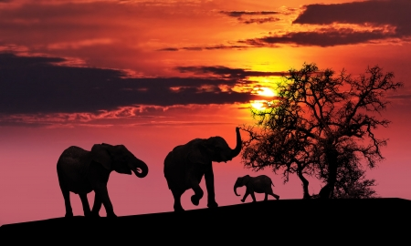 A family of elephants sunset silhouette photo