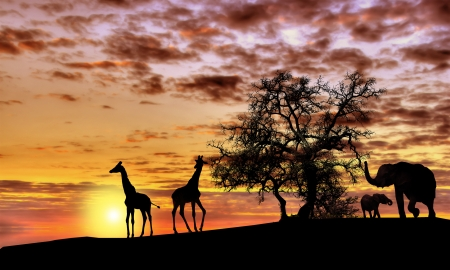 Animals in Africa at sunset silhouette Stock Photo - 14031373