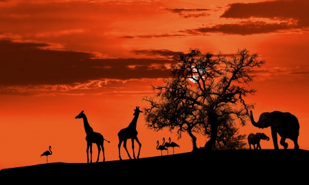 Animals in Africa at sunset silhouette Stock Photo