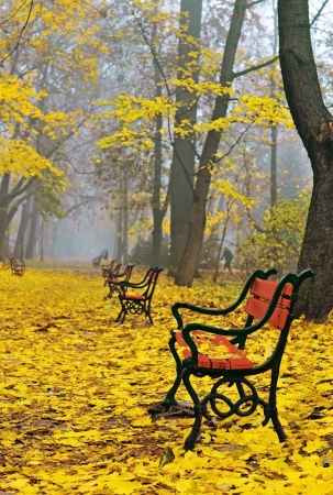 autumn scene: A row of red benches in a beautiful autumn park
