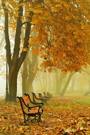 A row of red benches in a beautiful autumn park