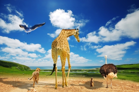 migrate: Animals migrate to green lands due to global warming