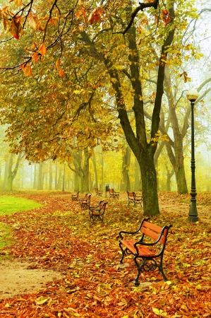 A row of red benches in a beautiful autumn park photo