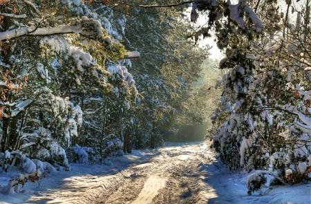 january sunrise: Camino forestal cubiertas de nieve en invierno