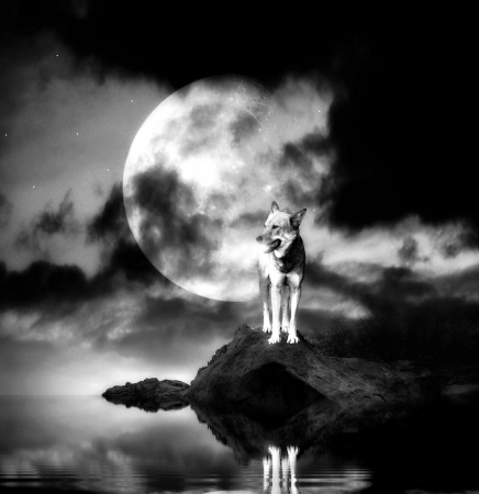 Lonely wolf with full moon reflecting in a lake