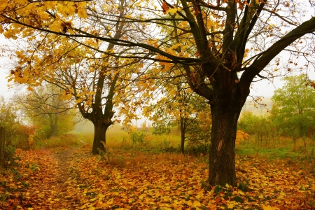 Colorful trees in the mist in fall photo