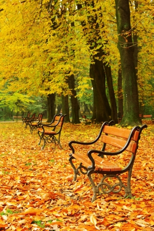 Red benches in the park in fall