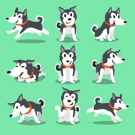 action: Cartoon character Siberian husky dog poses Illustration