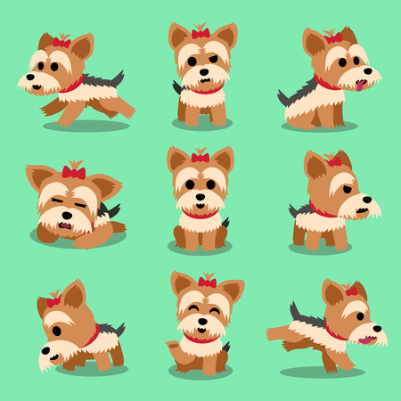 yorkshire terrier: Cartoon character yorkshire terrier dog poses set