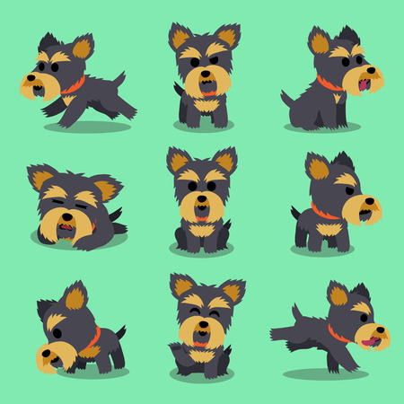 yorkshire terrier: Cartoon character yorkshire terrier dog poses Illustration