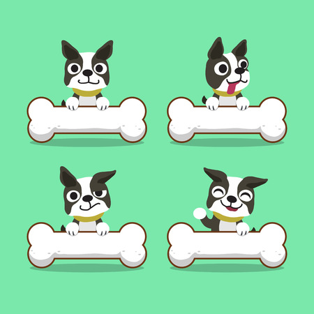 funny boston terrier: Cartoon character boston terrier dog with big bones