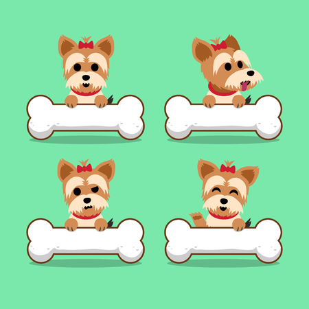 Set of cartoon character yorkshire terrier dog with big bones