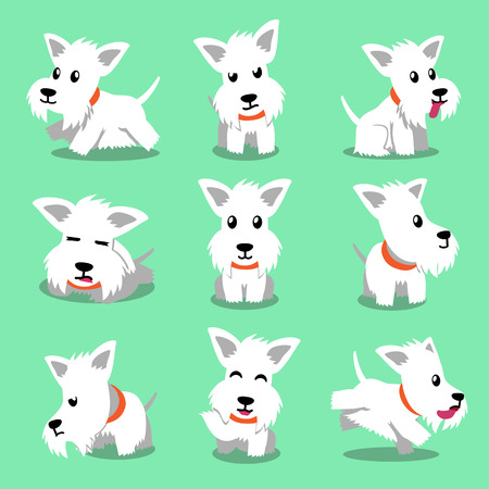 scottish terrier: Cartoon character white scottish terrier dog poses