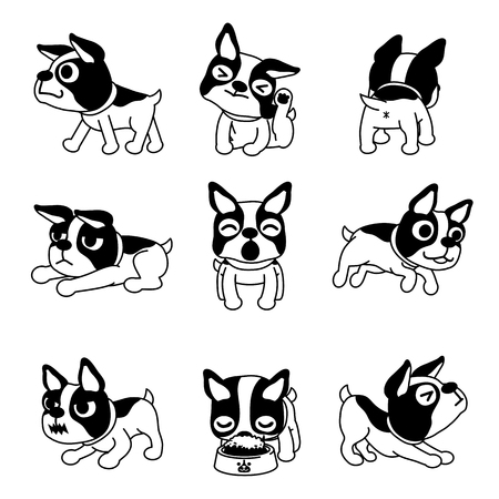 Set of vector cartoon character boston terrier dog poses  イラスト・ベクター素材