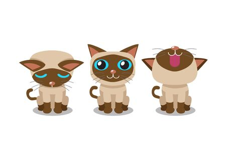 Set of vector cartoon character siamese cat poses for design.