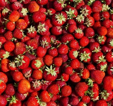 Large pile of fresh strawberries photo
