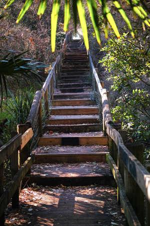 ecosistema: Boardwalk in thick coastal forest in Australia. Fenced wooden walking trail in woods