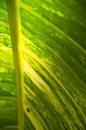 pattern of leaf Stock Photo - 6988377
