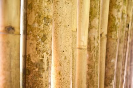 pattern of bamboo photo