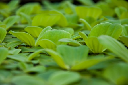 aquatic plant Stock Photo - 7024400