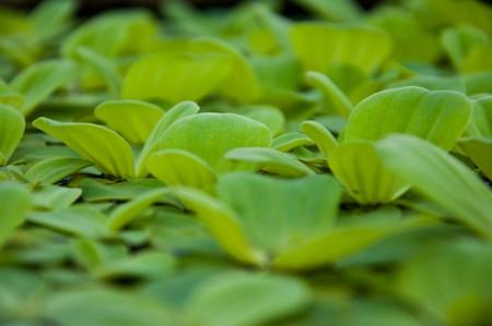 aquatic plant Stock Photo - 7024400