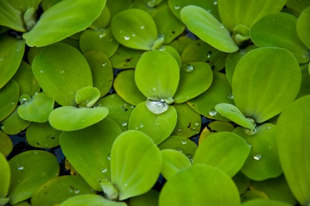 aquatic plant Stock Photo - 7024402