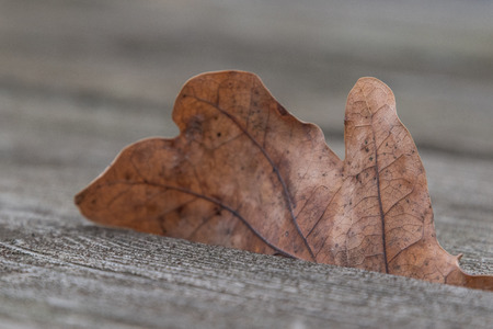 Leaf on a wooden table in the park of Pavese Canal near Milan