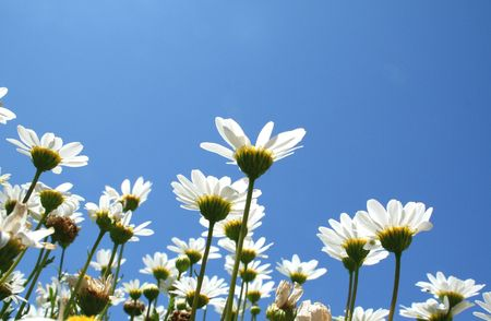 Looking up under the daisies.