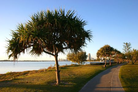 walking path: Walking path by the water lined with pandanus trees.