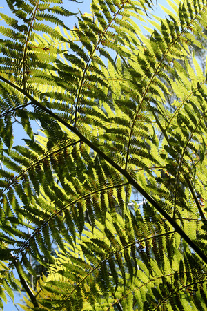 Background of backlit ribbed branches from rainforest fern. photo