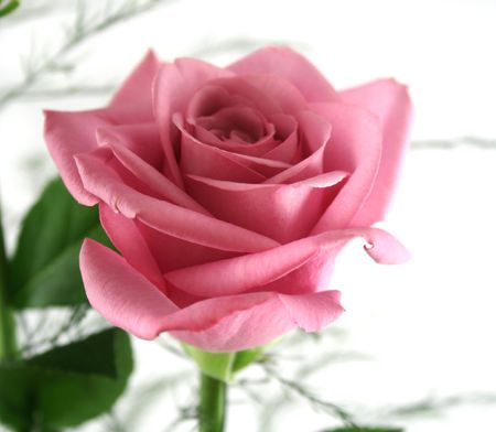 dearest: Beautiful gift arrangement of single pink rose with foliage.