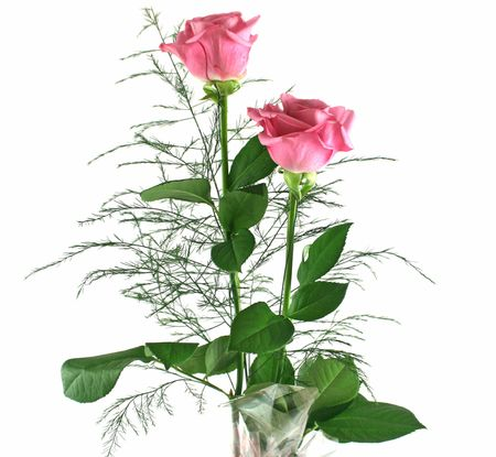 infatuation: Beautiful gift arrangement of two pink roses with foliage. Stock Photo