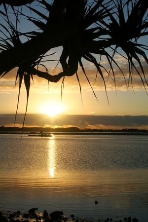 Silhouetted pandanus tree against the rising sun. Stock Photo - 2529613