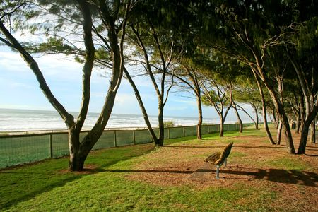 foreshore: Lonley seat on the beach foreshore under trees in the early morning sun. Stock Photo