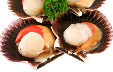 fan shaped: Freshly harvested sea scallops in their shells ready to serve.