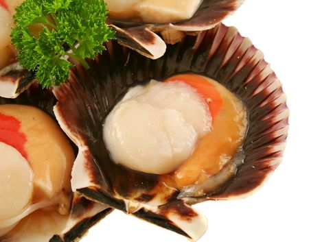 fan shaped: Freshly harvested sea scallops in their shells with parsley.
