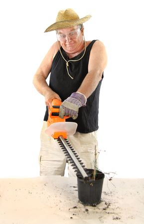 deranged: Manic gardener uses a hedge trimmer to trim a tiny dead plant. Stock Photo