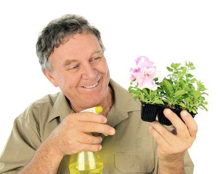 Middle aged nurseryman sprays a punnet of seedlings. Stock Photo - 5581323