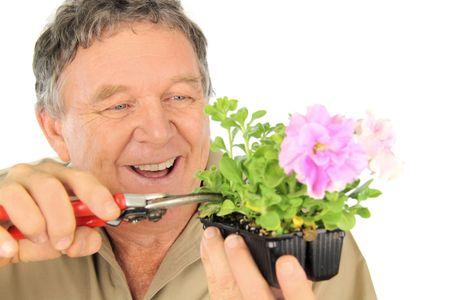 Middle aged nurseryman prunes a punnet of seedlings. Stock Photo - 5694470