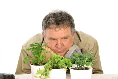 nurseryman: Middle aged nurseryman wondering whether his plants are going to grow.