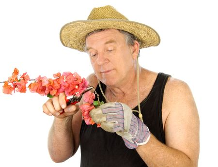 Middle aged gardener pruning a flowering bush. Stock Photo - 5946699