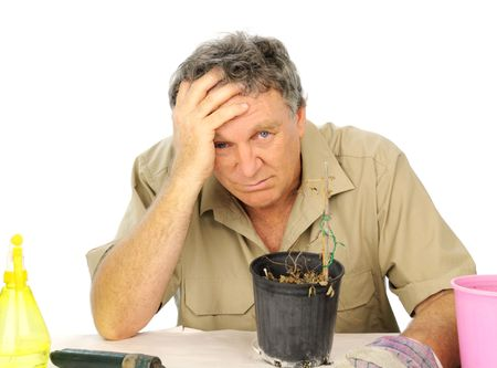 inconsolable: Bitterly disappointed nurseryman because his plant has died. Stock Photo
