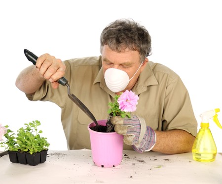 protective mask: Middle aged nurseryman plants flower in potting soil with protective mask. Stock Photo