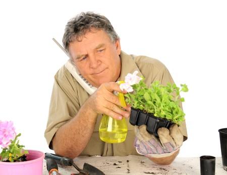 Middle aged nurseryman spraying seedlings while on the the telephone. Stock Photo - 7094838