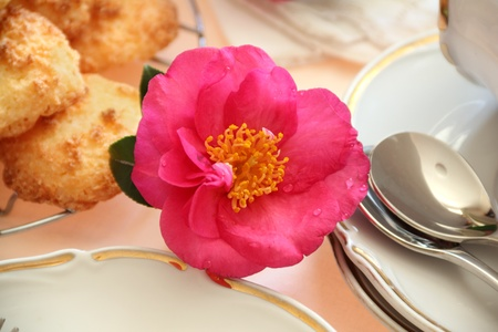 carpels: Beautiful camellia with water droplets as a decoration on the food table. Stock Photo
