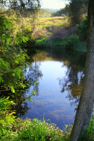 undisturbed: Reflections in a calm mountain stream on a quiet day.