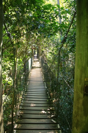 rope bridge: Suspended walking bridge deep in the forest with filtered light. Stock Photo